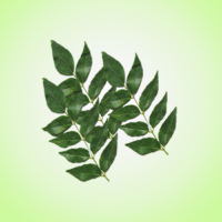 clove---curry-leaves